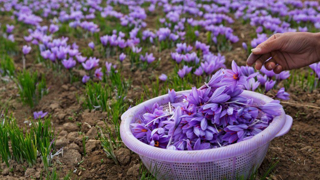 where to buy real saffron
