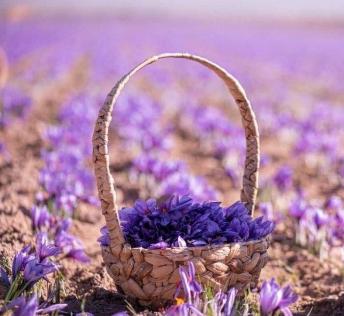 saffron australia